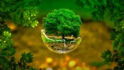 tree_in_broken_glass_sphere